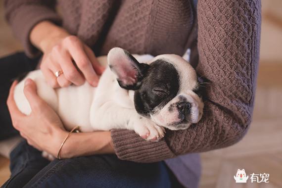 """很多人都说""""累成狗"""",你觉得狗有你累么?"""